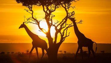 kenya couché de soleil